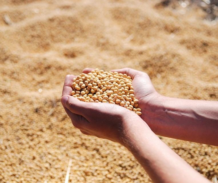 Lucro da soja é de 8,23% para produtor com rendimentos de 55 sacas por hectare