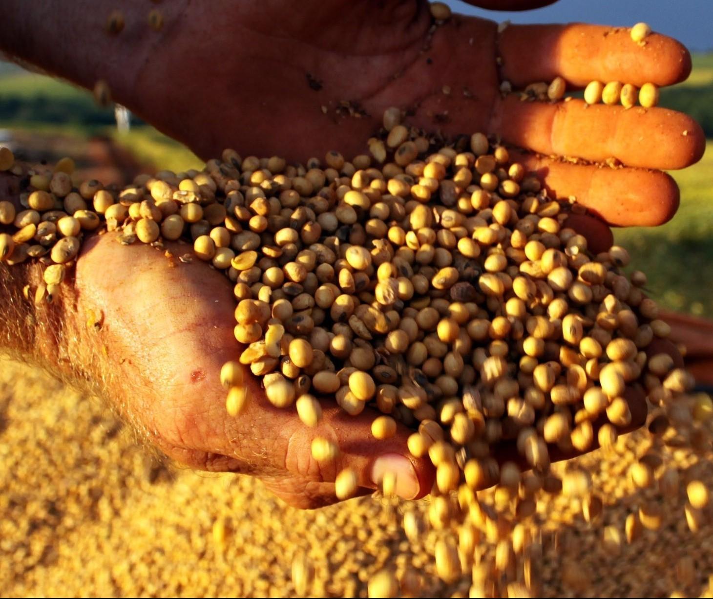 Soja custa R$ 74 a saca em Maringá