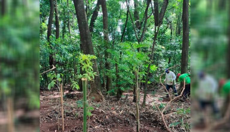 Parques de Maringá ganham quase mil novas árvores