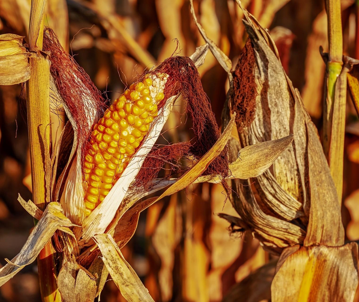 Governo vai retirar tarifas de importação de arroz, milho e soja