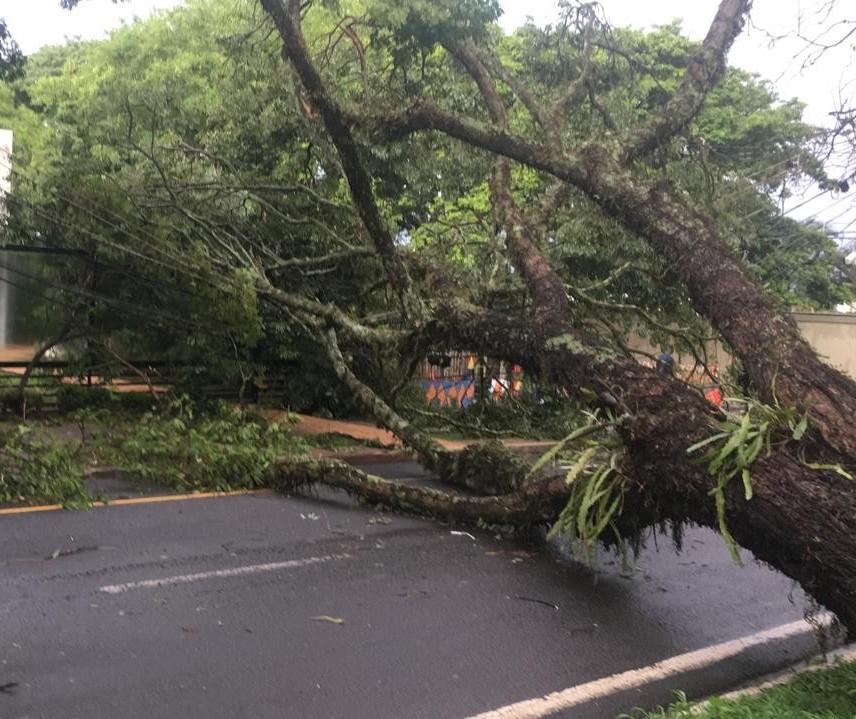 Maringá registrou ventos de 82 km/h e 99 mm de chuva durante o temporal