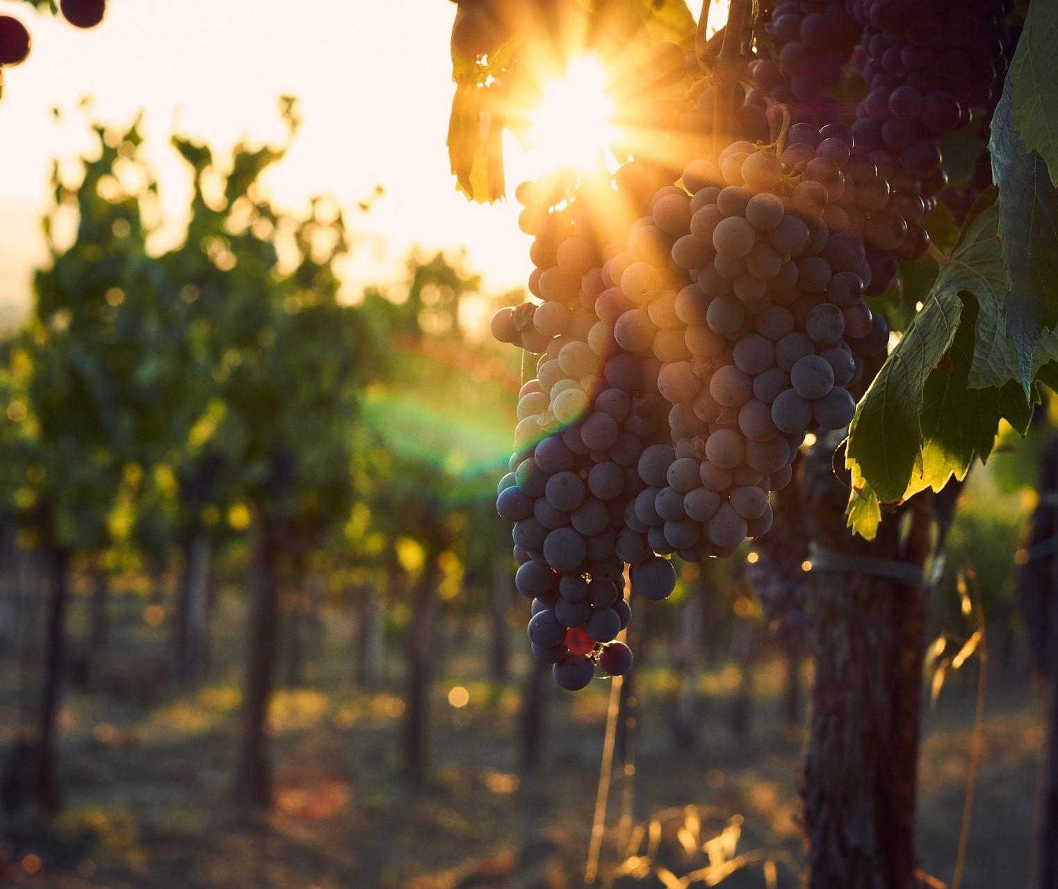 Primavera, renovação e vinhos