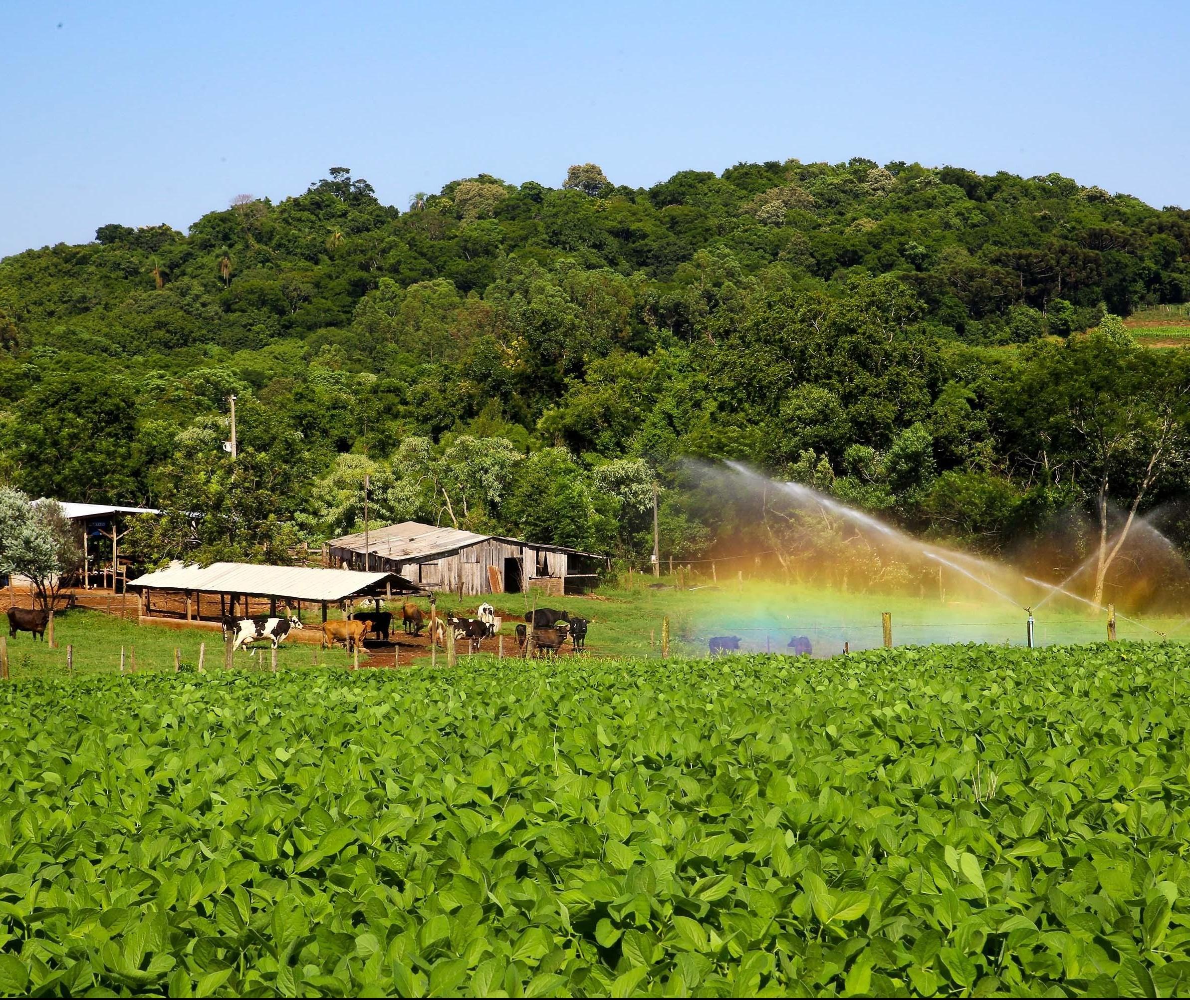 Contratos do Plano Agrícola e Pecuário sobem 32%