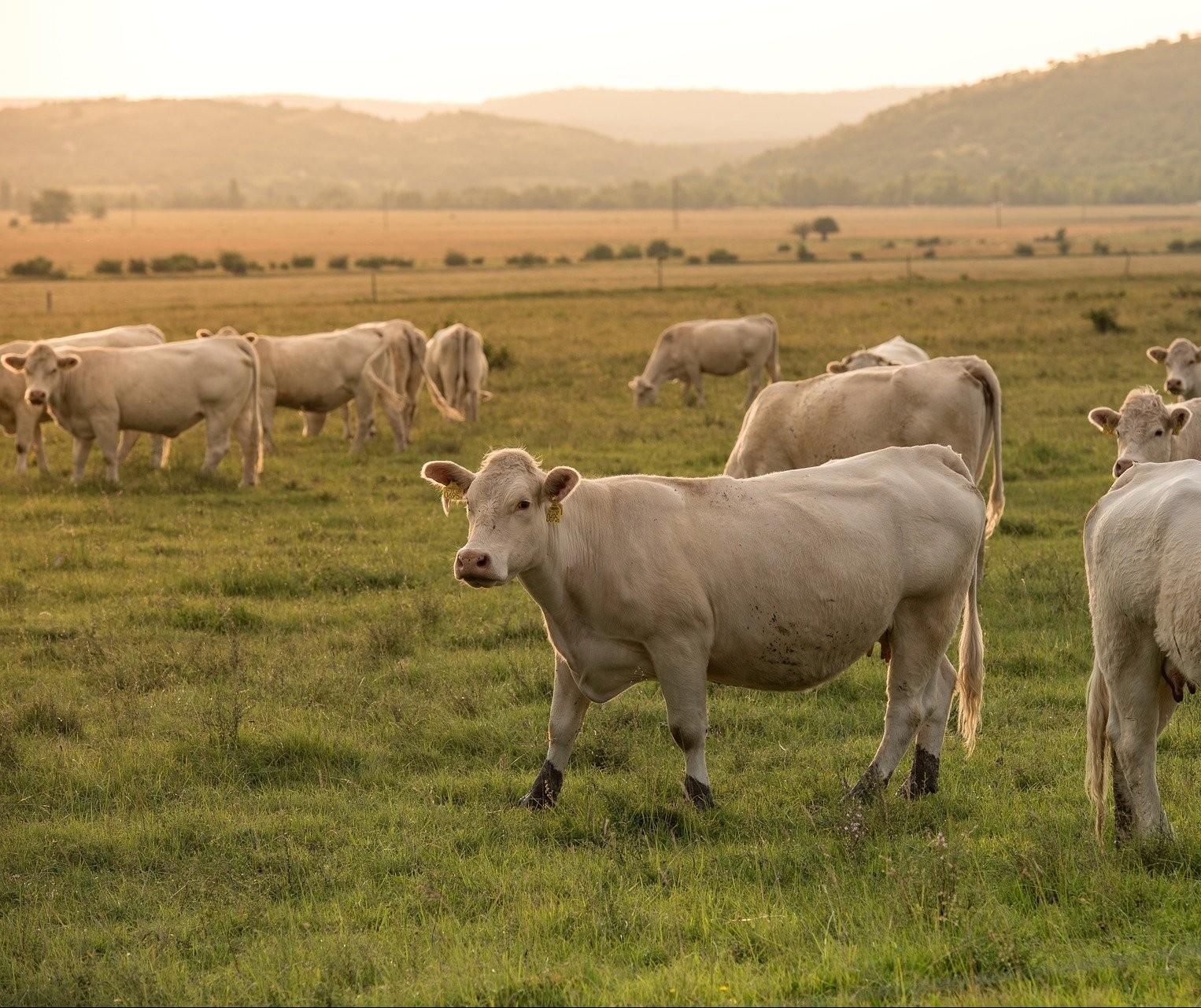 Preço da carne no atacado segue firme acima dos R$ 16/Kg em plena segunda quinzena do mês