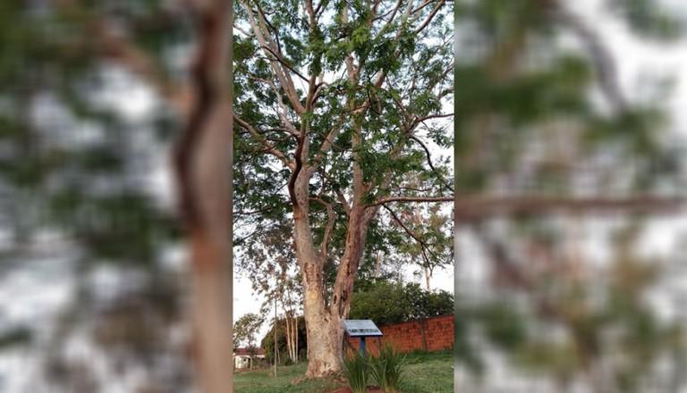 Homem é multado em R$ 10 mil reais por arrancar casca de árvore