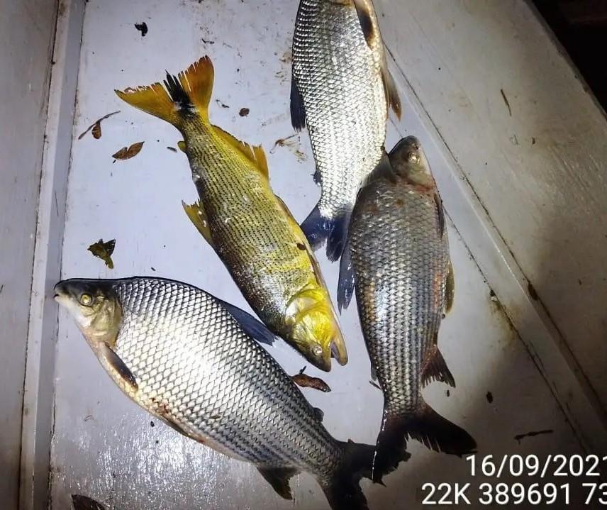 Pescadores flagrados no Rio Ivaí são multados por pesca ilegal, diz Polícia Ambiental