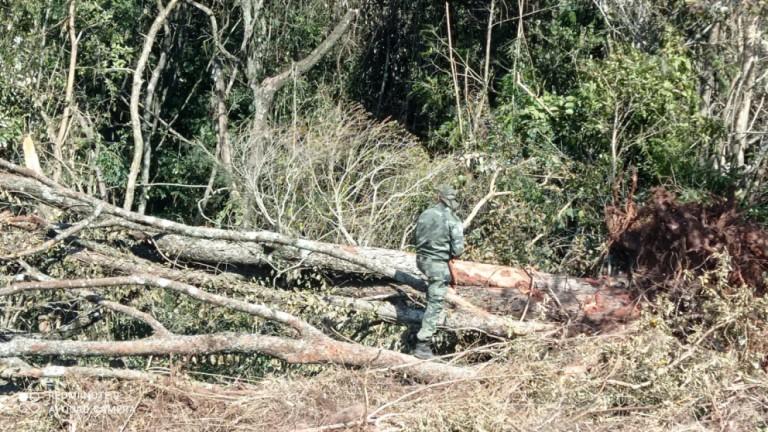 Operador de máquina posta vídeo em rede social e Polícia Ambiental descobre desmatamento