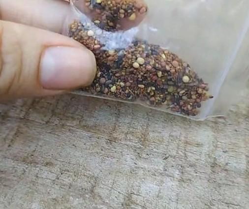 Laboratório encontra praga Myosoton Aquaticum em pacotes de sementes misteriosas