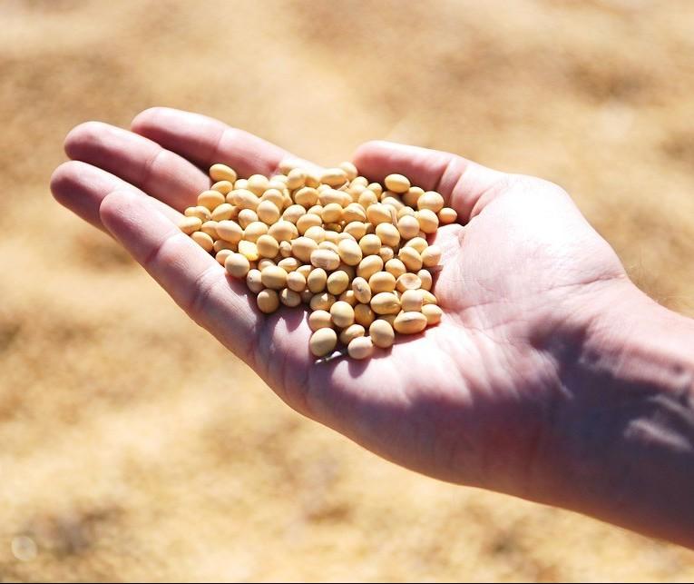 Reta final do plantio da soja no Paraná