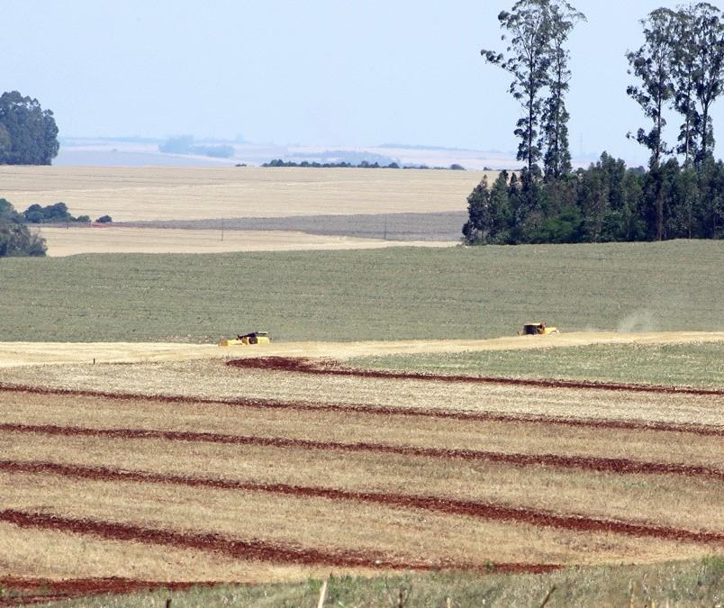 Área plantada de soja e milho deve ser maior na primeira safra