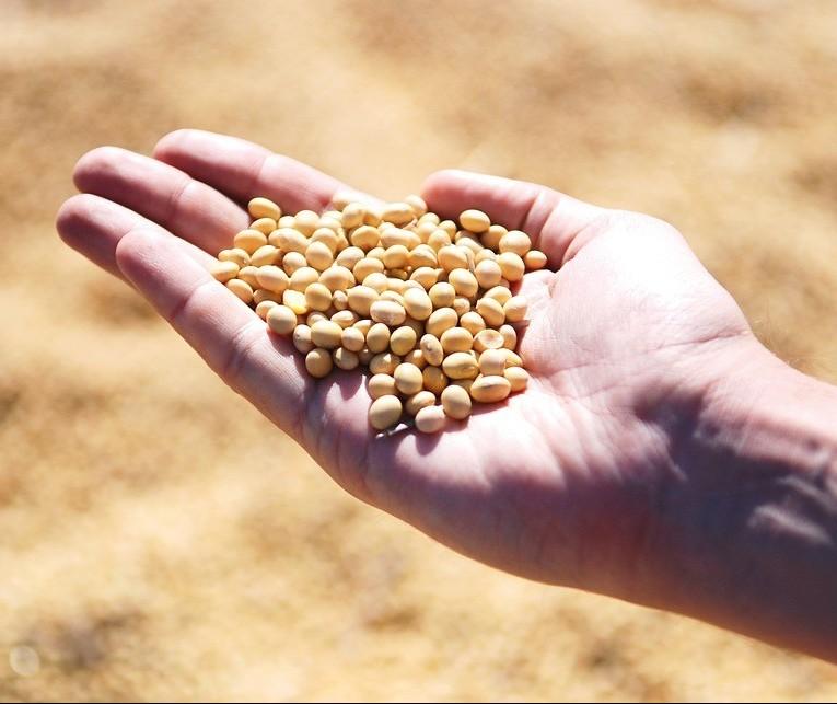 Plantio da soja ultrapassa números da safra passada