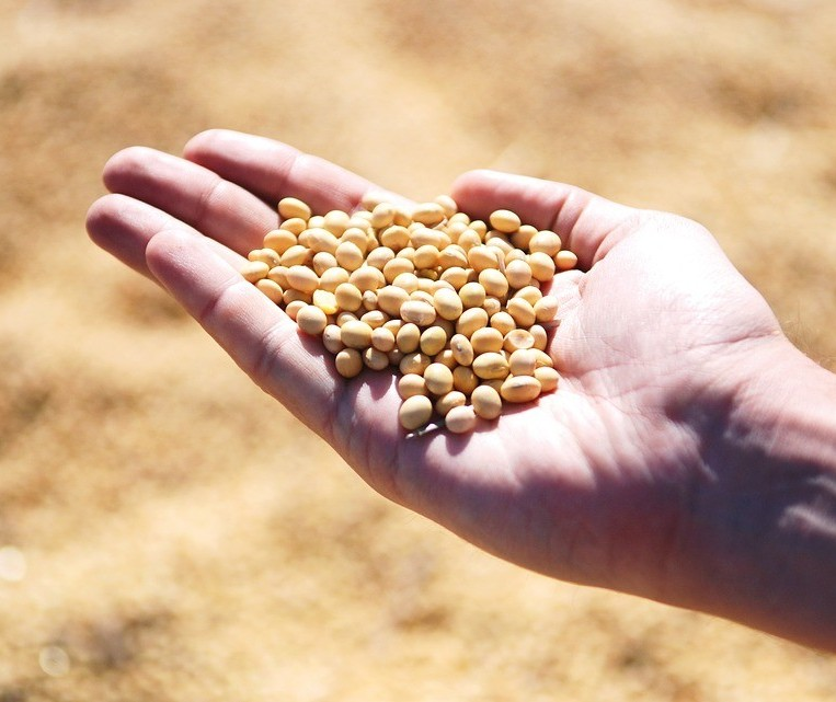 Semana deve ser de instabilidade no mercado da soja
