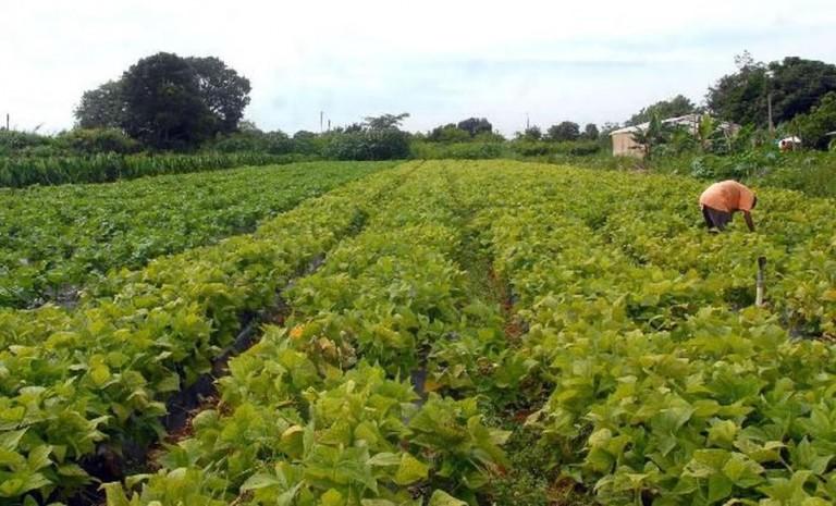Atuação das Cadecs foi fundamental para produtores rurais em Carambeí