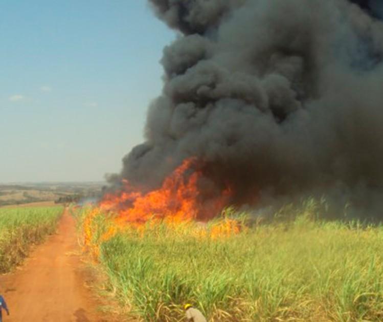 Campanha contra incêndios criminosos oferece recompensa em troca de informação
