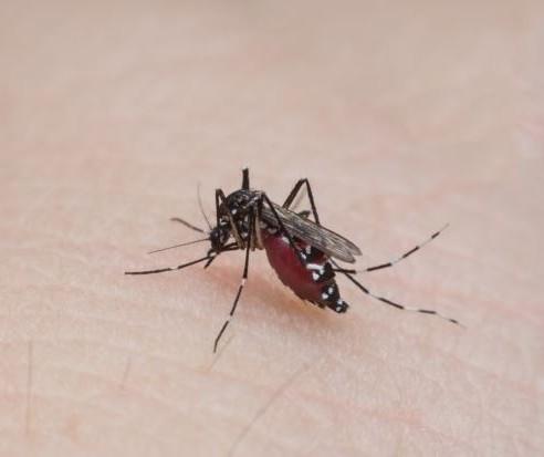Secretaria de Saúde alerta para criadouros do mosquito da dengue