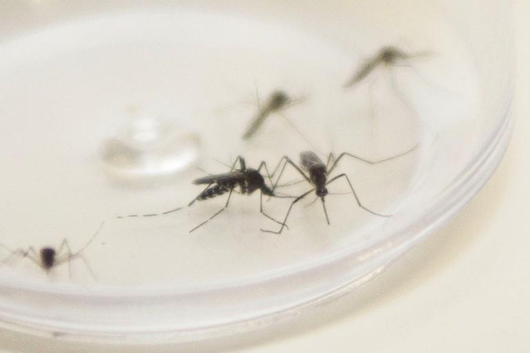 Saúde registra três casos de dengue em Maringá