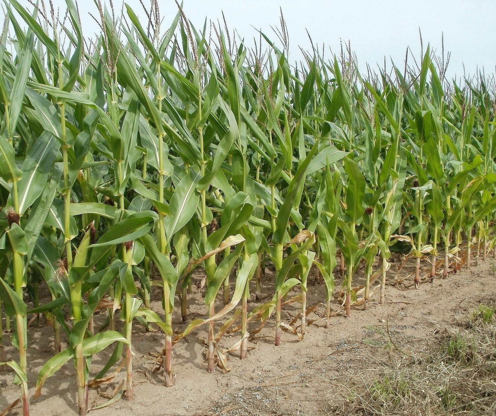 Preço de defensivos agrícolas deve subir nos próximos meses