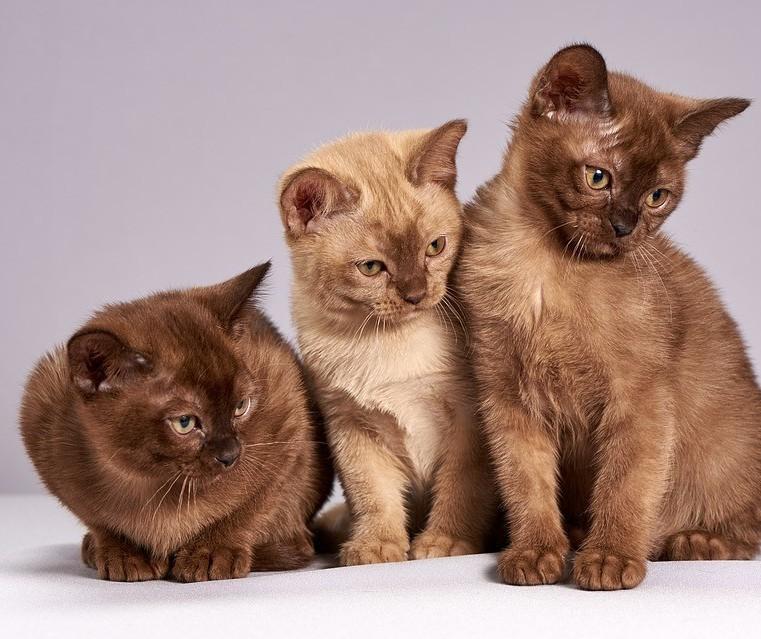 Gatos são realmente independentes?