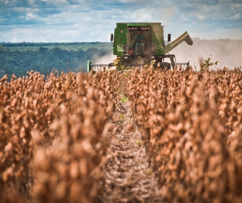 Paraná deve colher 19,5 milhões de toneladas de soja