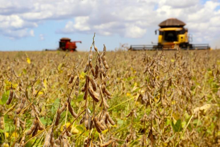 Consultoria reduz estimativa de produção de soja da safra 2020/2021