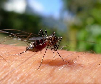 Em novo calendário epidemiológico, Maringá confirma um caso de dengue