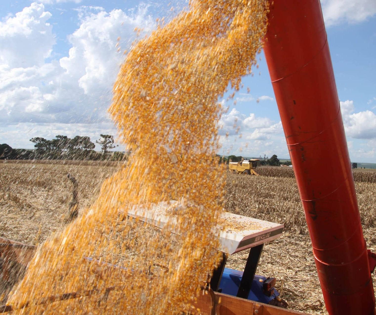PR: Safra de grãos 2018/19 está sendo encerrada com total estimado de 36,3 mi de toneladas