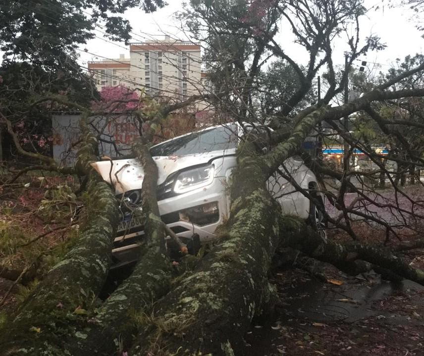 Árvore cai sobre caminhonete em movimento em Maringá
