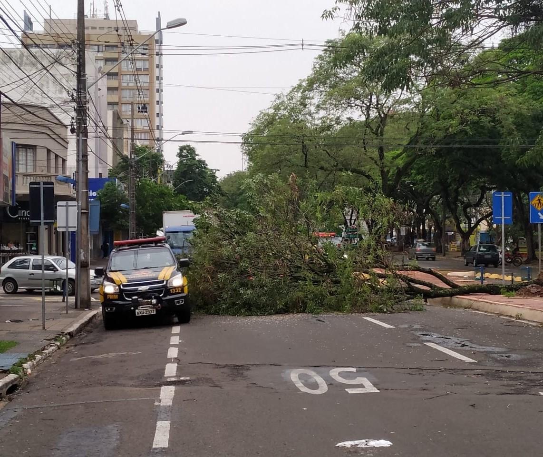 Já passa de 80 o número de árvores caídas em Maringá