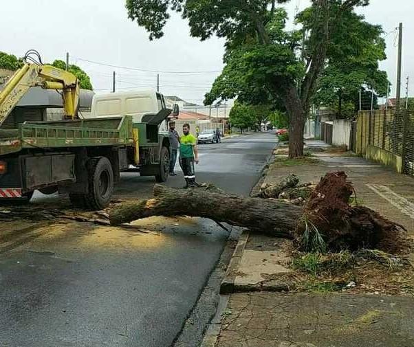Chuva derruba árvores neste domingo (17) em Maringá