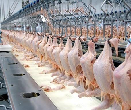 Brasil exportou 112 mil toneladas de carne de frango na primeira semana deste mês