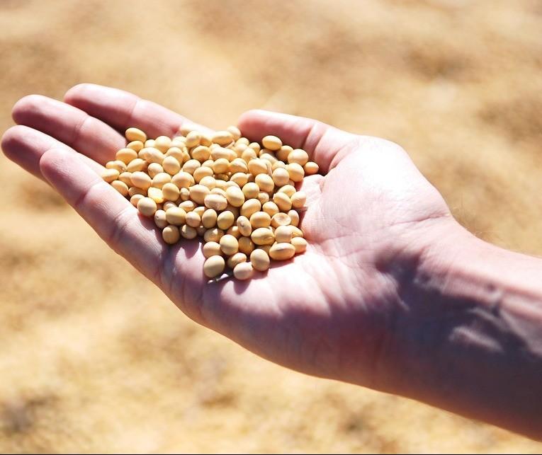 Oeste do Paraná é o mais adiantado na plantação da soja