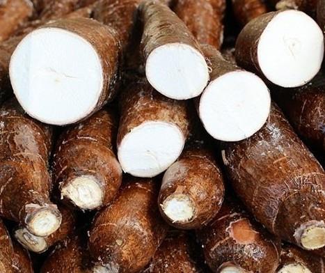 Raiz de mandioca custa R$ 345 a tonelada em Campo Mourão