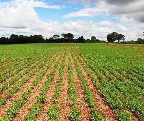 Plantio de soja no Brasil alcança 21% da área projetada para a safra 2019/20