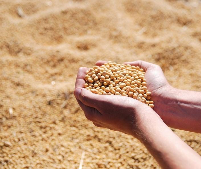 Soja custa R$ 78,50 a saca em Campo Mourão