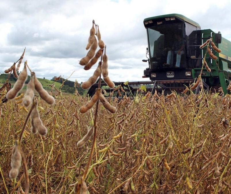 Produção de soja no Brasil tem potencial para atingir recorde