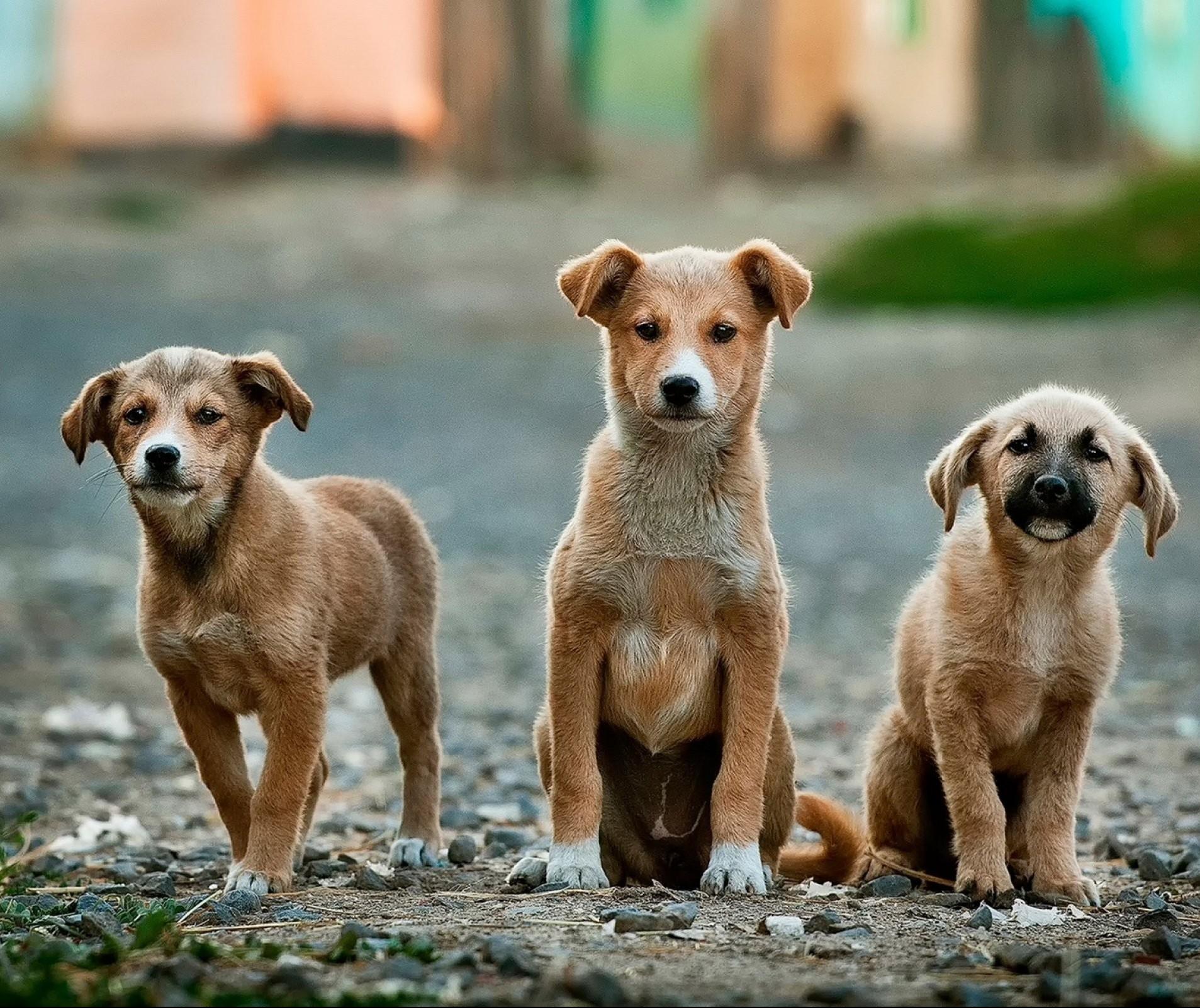 Quase 7 mil animais foram castrados em 2019