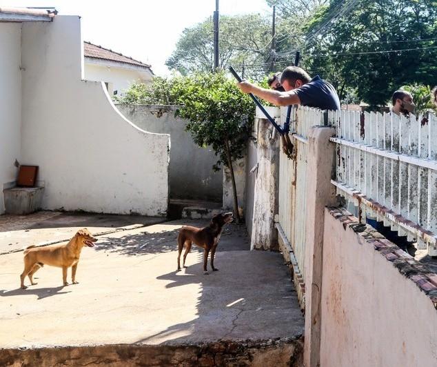 Cães abandonados são resgatados em casa de Maringá