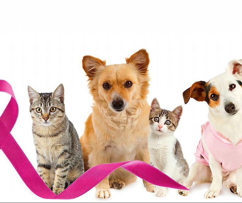 Outubro Rosa também é período de prevenção para cadelas e gatas