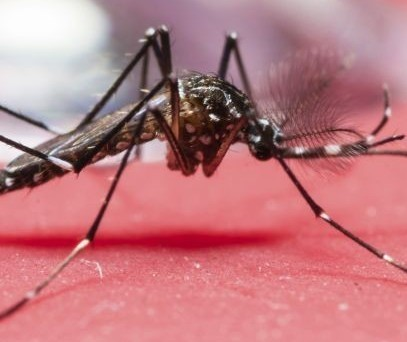 Saúde confirma mais um caso de H1N1 e 117 de dengue