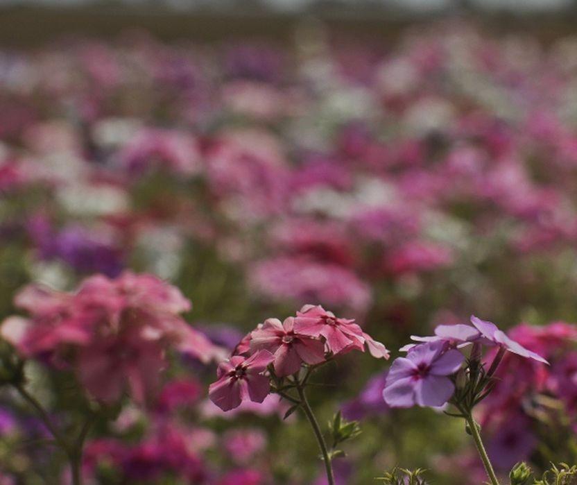 Primavera começa na tarde desta quarta-feira (22)