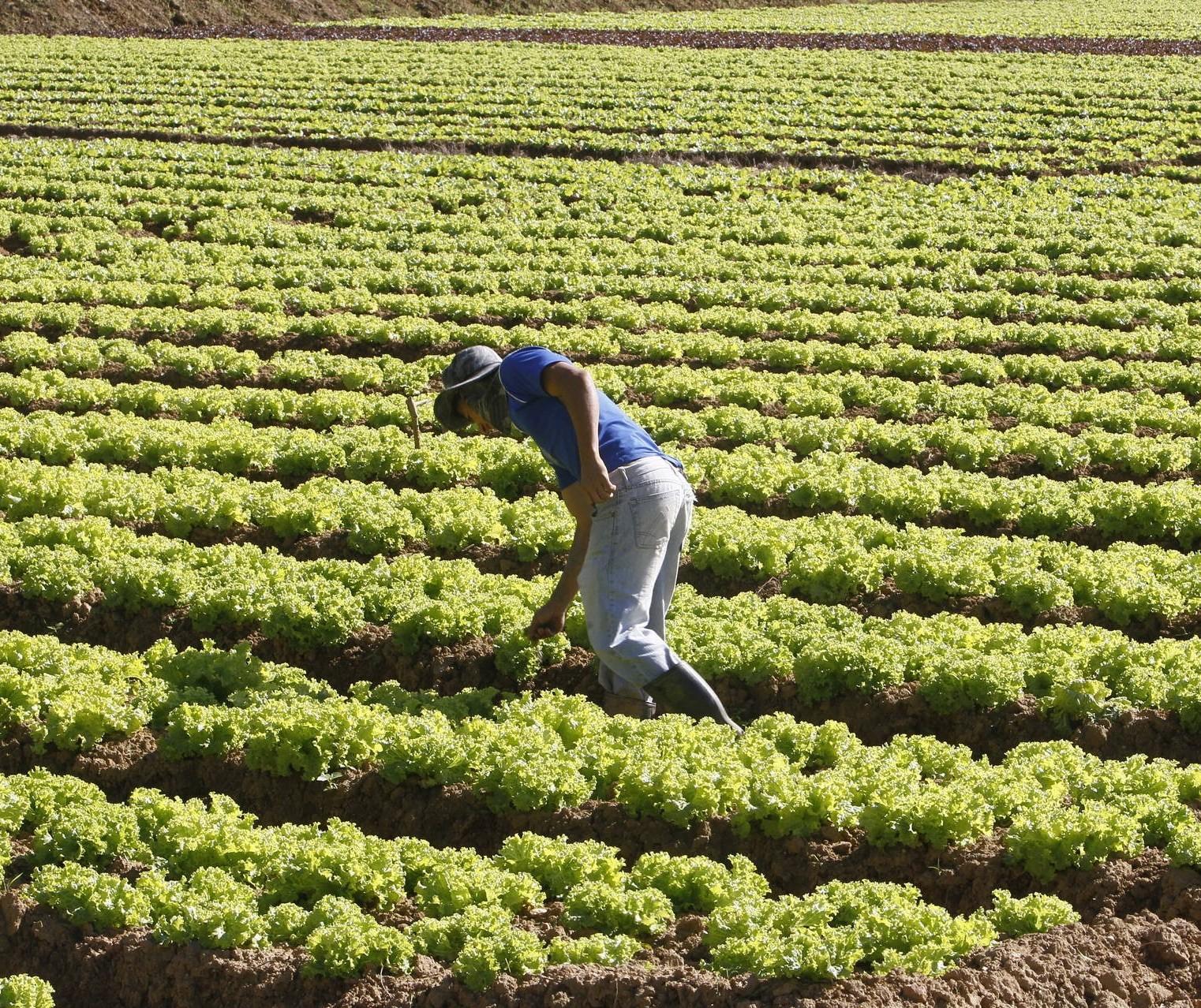 Agricultura alavanca empregos em cidades do interior