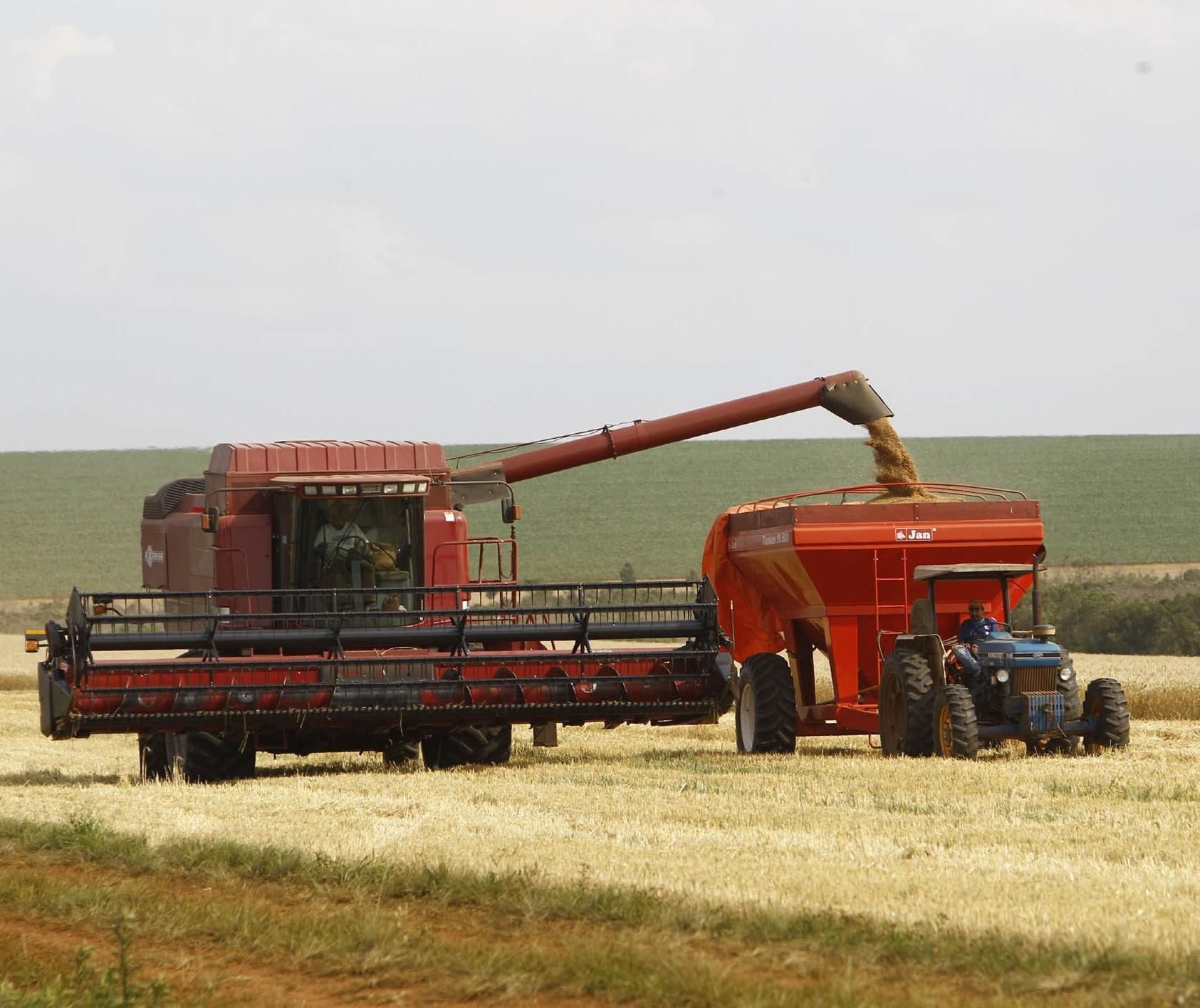 Começa a colheita do trigo, na região de Maringá