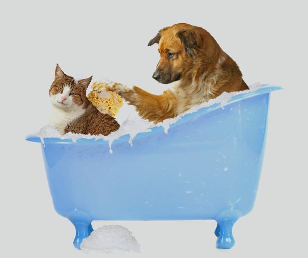 Banho em excesso elimina as bactérias do 'bem' que vivem na pele do animal