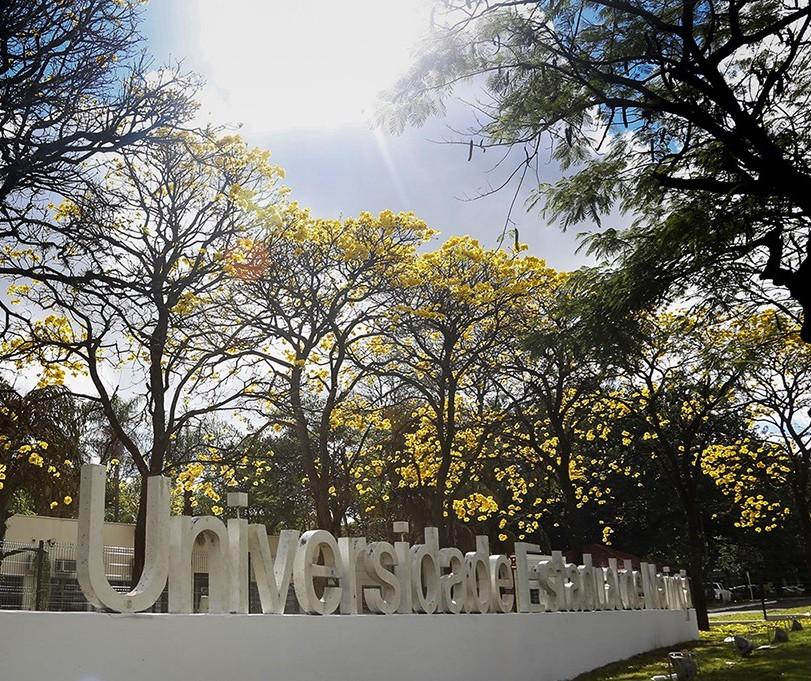 inscrições para PSS da UEM para professor temporário vão até dia 14