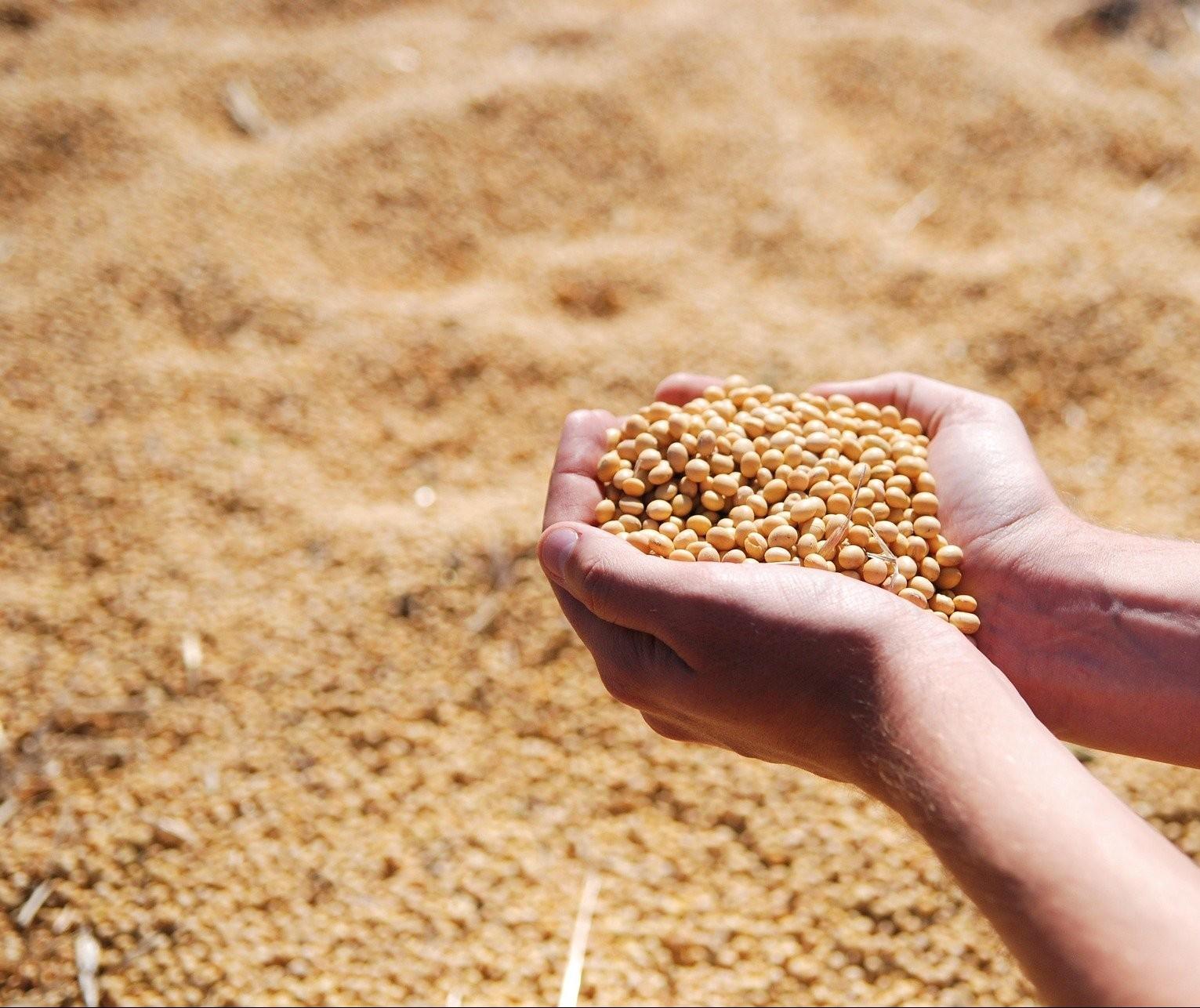 Soja custa R$ 115 a saca em Campo Mourão