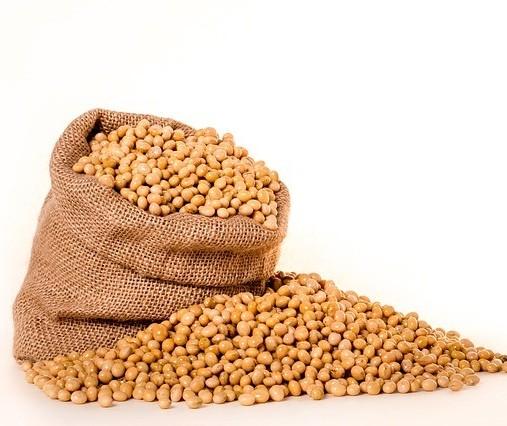 Colheita da soja na região de Maringá está dentro do esperado