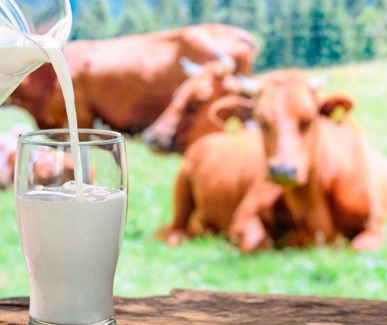 Em torneio, vaca bate recorde mundial ao produzir 335 Kg de leite em três dias