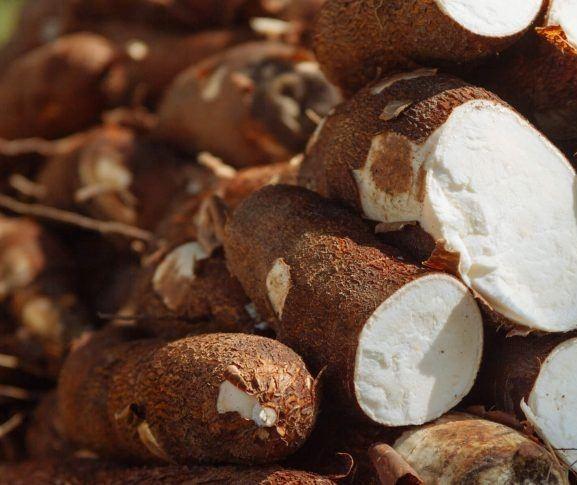 Em Paranavaí, tonelada da raiz de mandioca custa R$ 330