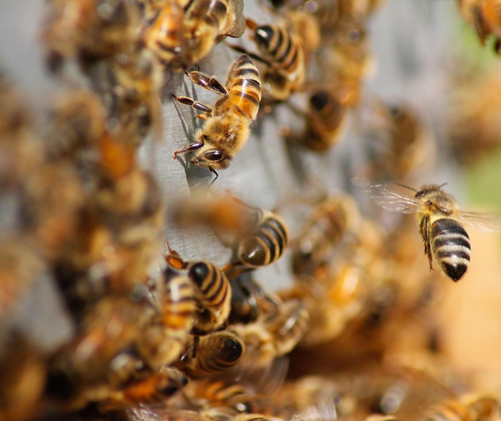 Aplicação irregular de agrotóxico está matando abelhas e bichos da seda