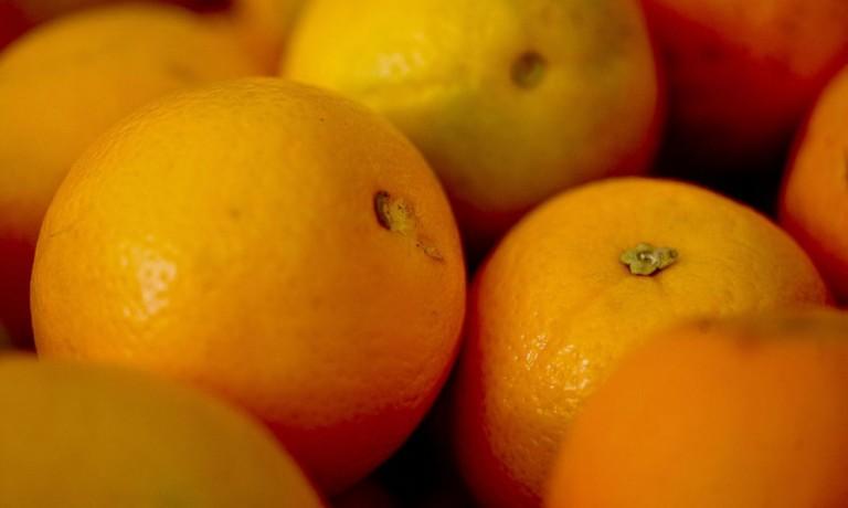 Greening atinge 18% das produções de citros no Brasil